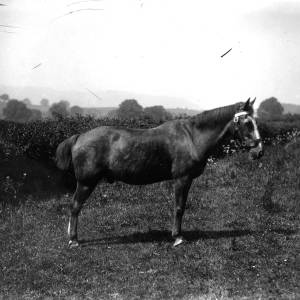 G36-543-04 Horse with bridle in a meadow.jpg