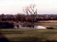 Wimbledon Common: Ponds