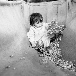 Baby in a Hop Crib, Withington, Herefordshire, 1968