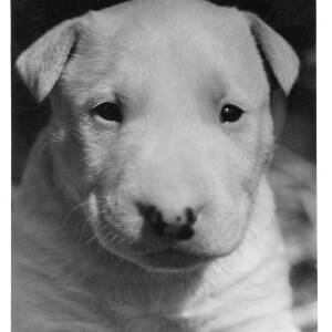 471 - Close up of a very young puppy