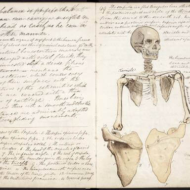 Anatomy for Artists - Patrick Heron Watson Lecture Notebook