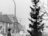Rotary Club Christmas Tree, Fair Green, Mitcham
