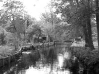 Wandle from Phipps Bridge