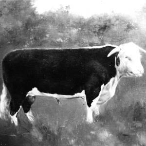 G36-549-06 A bull.jpg