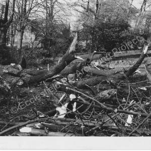 Staindrop Lodge - Clearing Trees (some storm damaged).
