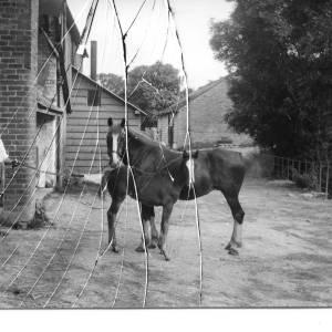 G36-047-09 Horse foal man.jpg