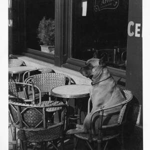494 - Large dog sitting in cane chair outside café