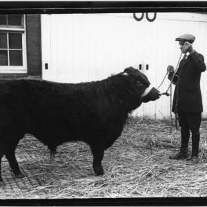 G36-083-12 Black bull with handler.jpg