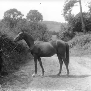 G36-247-08 Man displaying mare .jpg
