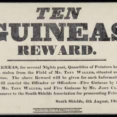 Ten Guineas Reward