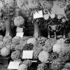 Flower / Horticultural Shows
