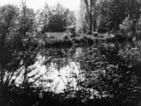 The River Wandle at Ravensbury Manor