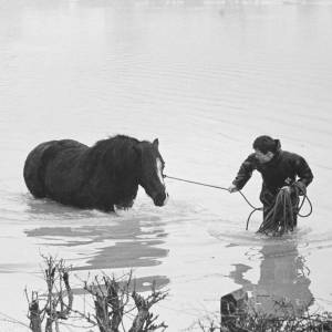 Man leads horse to safety