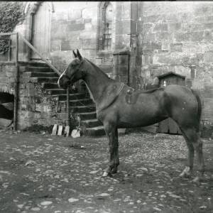 G36-212-13 Brinsop Court, horse standing in yard .jpg