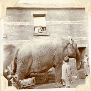 CJS002 Elephants, Millpond Street, Ross-on-Wye, 1938.jpg