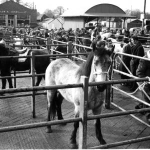 Cattle Market (now Old Market Close), Ross-on-Wye, c.1950s