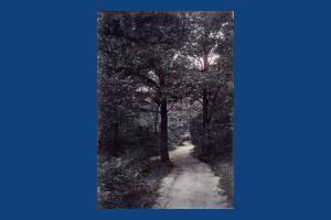 Path near Queensmere, Wimbledon Common