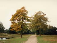 Mitcham Common