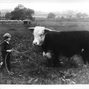 G36-241-10 Small boy with bull.jpg