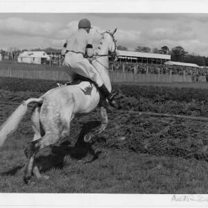 "233 - Jockey on horse jumping fence ""The Last Fence"""