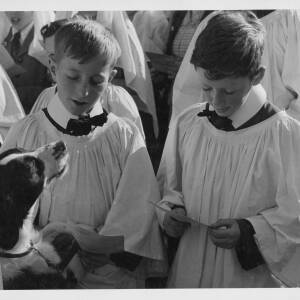 """485 - """"Animal Blessing Service at Hereford"""""""