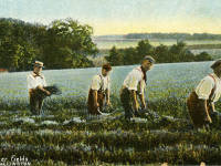 Lavender Fields, Wallington