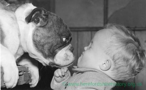 A small boy close up with a British Bull Dog.