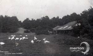Mayes farm, Wimbledon Common