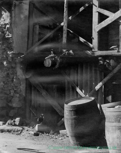 189-2 - Three kittens on a beam