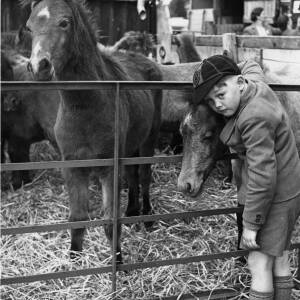 A Welsh mountain pony sale at Fayres Oak.