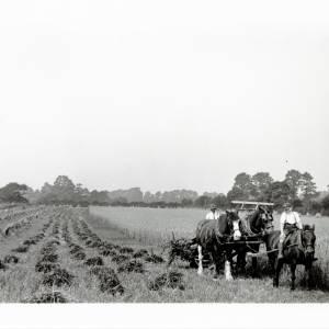 Harvesting corn, Wellesbourne 1932