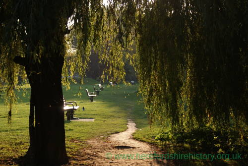 Willows by River Wye, Ross 3.jpg