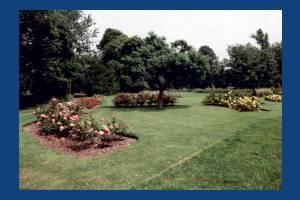 Morden Hall Park, Morden: Rose Garden