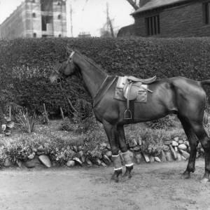 G36-312-12 Saddled hunter with groom.jpg