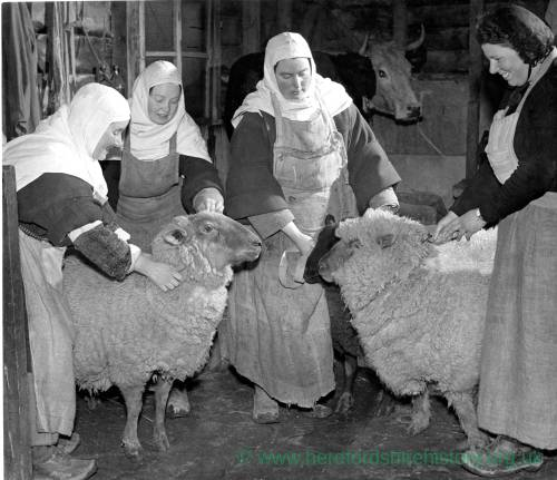 Four nuns tending to animals on the farm