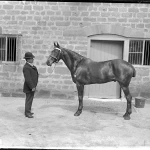 G36-287-08 Man holding reins of stallion in yard.jpg