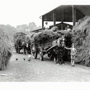 Harvest Time, building the rick in the barn, Wellesbourne, 1932