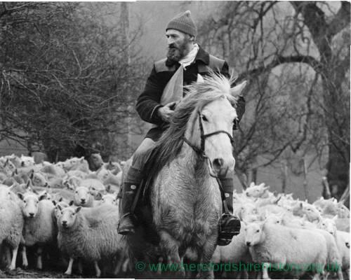 "168 - ""Welsh Hill Farmer"""