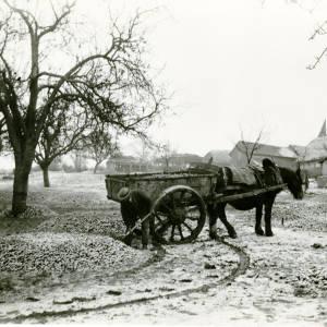 Apple Picking, Pomona Farm