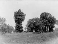 Vicar's field, Mitcham Parish Church