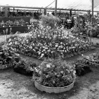 Southport Flower Show exhibition from London in 1926