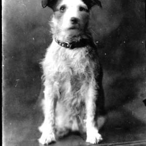 G36-127-02 Terrier dog.jpg