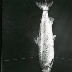 G36-186-12 Dead salmon.jpg