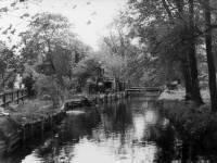 The River Wandle, near Phipps Bridge.