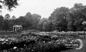 The Rose Garden, Morden Hall, Morden