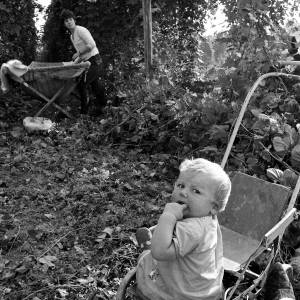 Blonde, Teething Child in a Push Chair in a Herefordshire Hop Yard, 1967