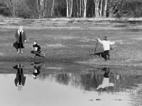 Pond on Mitcham Common