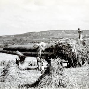 Harvesting in Dormington, c1939
