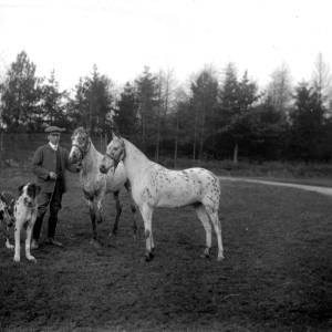 G36-319-02 Two piebald horses with Harlequin Great Dane.jpg