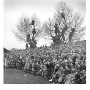 People watching a football match from trees
